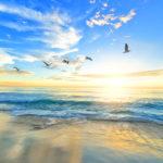 海の夢の夢診断