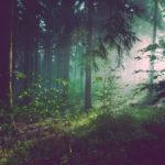 森の夢の夢診断